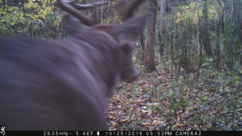 """Big Ohio buck up close.  Trail camera wait for it.  165"""" Total"""