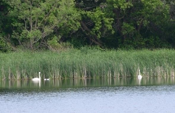 Bountiful Wildlife And Natural Areas At Ingham-High Wetland Complex