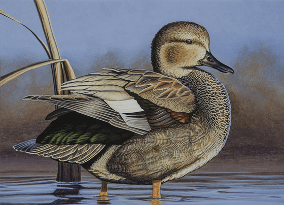 Cannon Falls Artist Wins Duck Stamp Contest